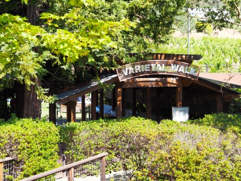 Winery Varietal Walk